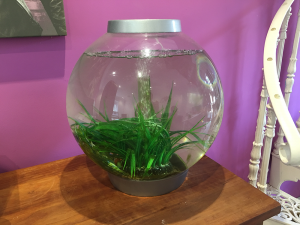 The Bio-Orb fishbowl in the Visualise Creative studio.